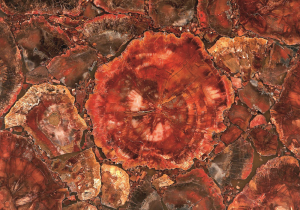 RED PETRIFIED AFRICAN
